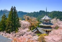 Yoshinoyama, Japan Spring Scene photo via Depositphotos